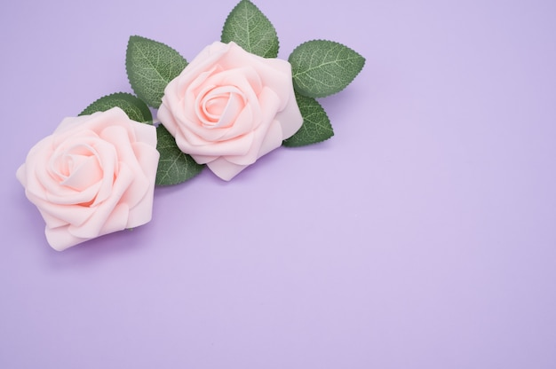 Closeup shot of pink roses isolated on a purple background with copy space