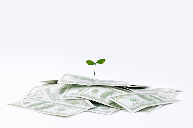 Closeup shot of a plant on dollar banknotes - concept of investments