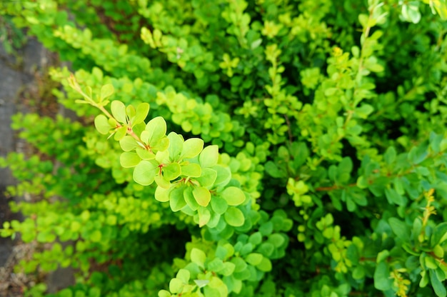 Closeup shot of a plant with green leaves - great for a background