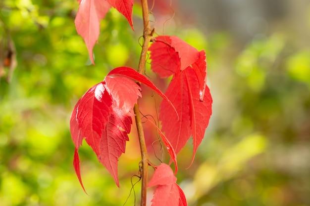 Primo piano di una pianta con foglie rosse