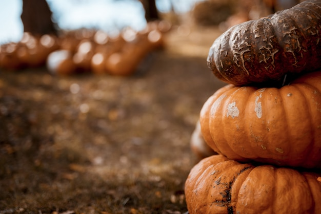 Closeup shot of pumpkins on top of each other with a blurred background
