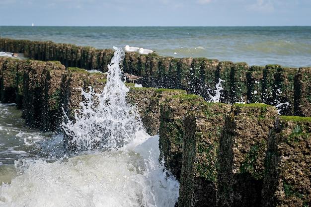 Colpo del primo piano di rocce con muschio in cima in un mare mosso