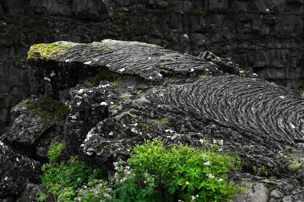 Colpo del primo piano di una scogliera rocciosa ricoperta di muschio su uno sfondo sfocato