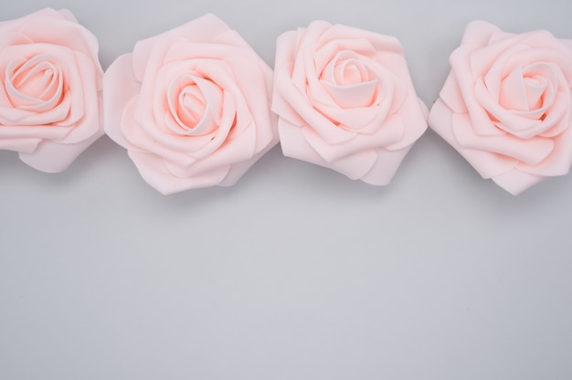 Closeup shot of a row of pink roses isolated on a purple background with copy space