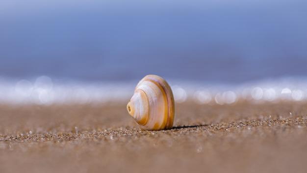 Colpo del primo piano della conchiglia sulla sabbia