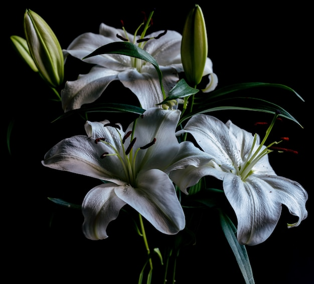 Closeup shot of several white flowers next to each other behind a black background