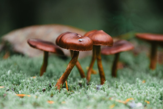 Closeup shot of shiny small mushrooms growing from a surface covered in green moss