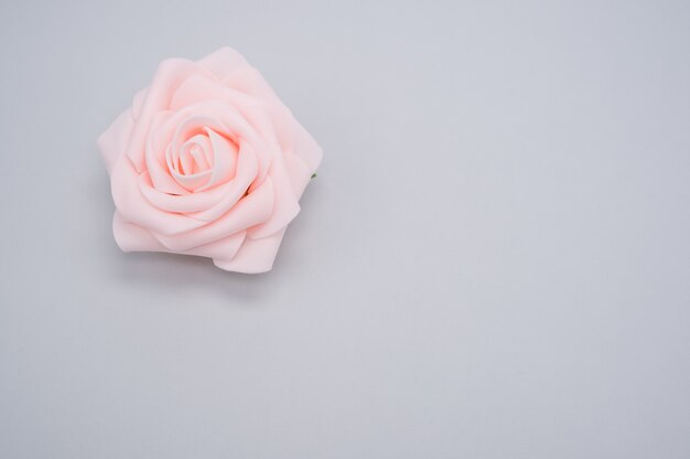 Closeup shot of a single pink rose isolated on a blue background with copy space