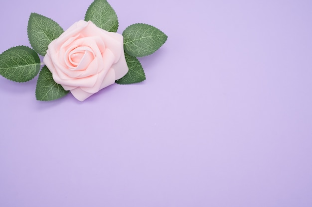 Closeup shot of a single pink rose isolated on a purple background with copy space