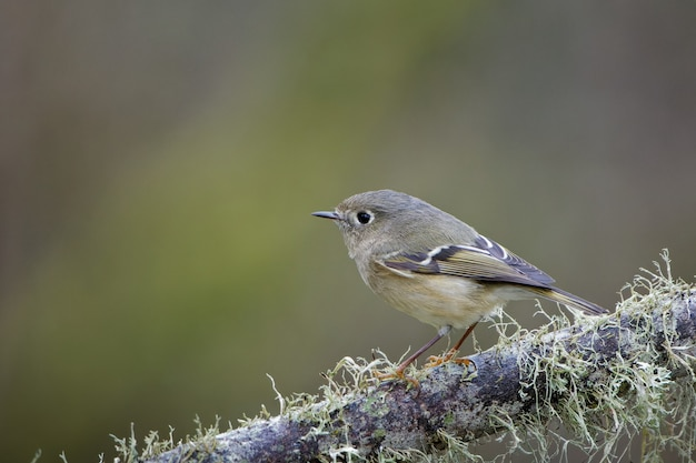 Primo piano di un uccellino su un ramo di un albero