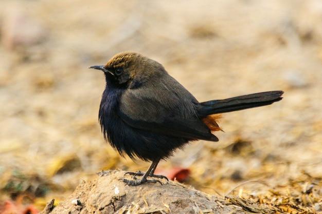 Closeup shot of a small black bird standing on the rock
