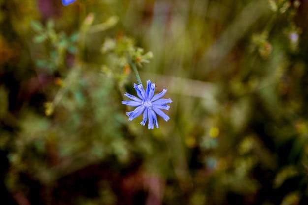 Colpo del primo piano di piccolo fiore blu con uno sfondo naturale vago
