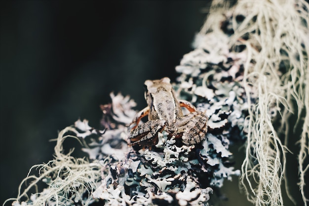Closeup shot of a small frog sitting on a branch