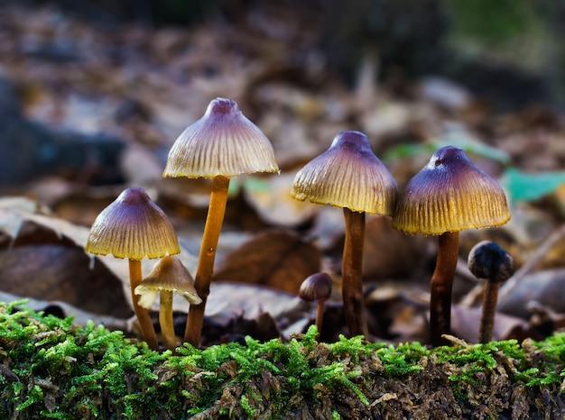 Colpo del primo piano di piccoli funghi in un bosco di castagni
