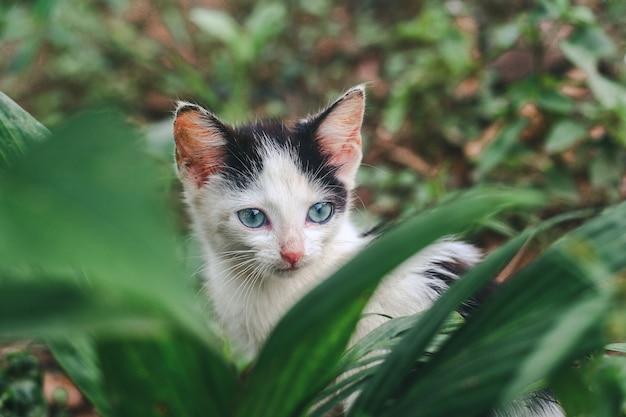 Colpo del primo piano di un piccolo gatto bianco nella natura