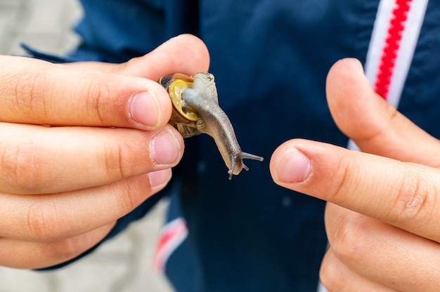 Closeup shot of a snail being held in the hands of a male person wearing a blue jacket