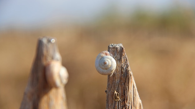 Closeup shot of a snail on a piece of wood