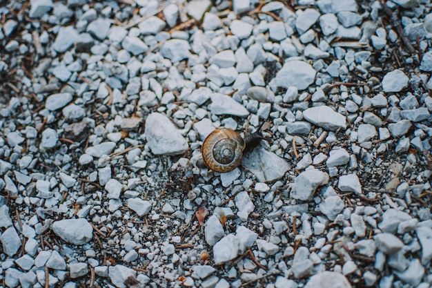 Closeup shot of a snail in a shell on rocks in a forest
