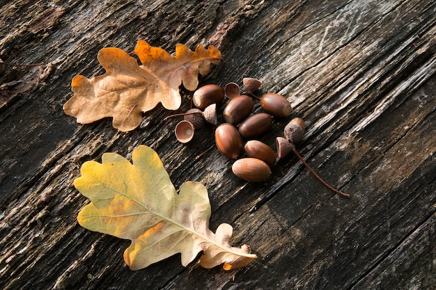 Closeup shot of some acorns next to two dry leaves put on a piece of wood