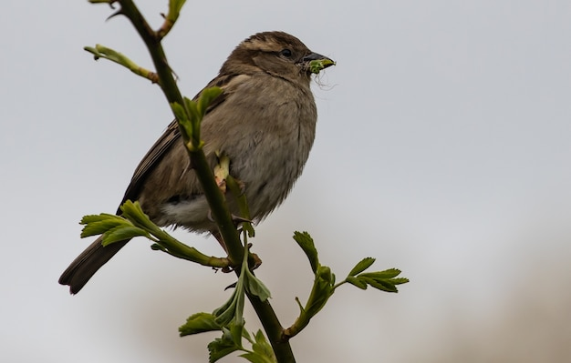 Closeup shot of a sparrow perched on a branch