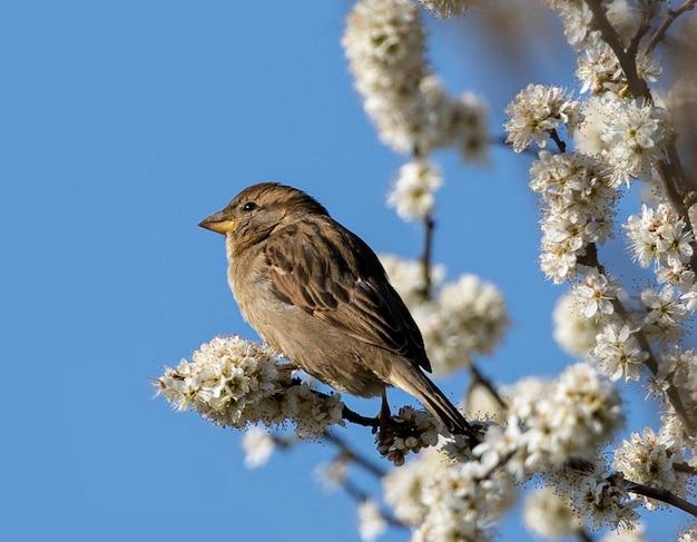 Primo piano di un passero appollaiato su un ramo