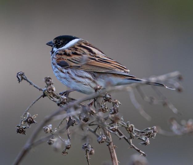 Closeup shot of a sparrow perched on bush