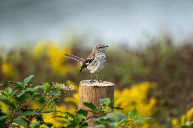 Primo piano di un passero su un tronco d'albero