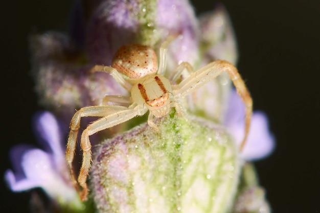 Colpo del primo piano di un ragno su una pianta fiorita davanti a uno sfondo nero