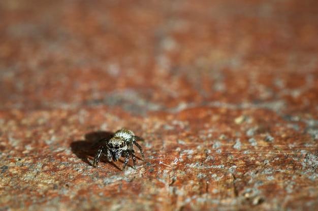 Primo piano di un insetto ragno su un terreno di cemento arrugginito