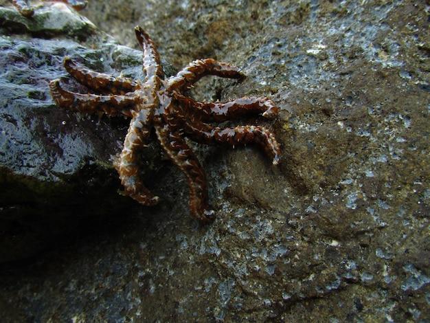 Primo piano di una stella marina a wied znuber