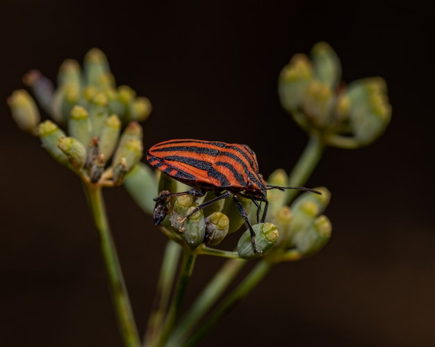 Closeup shot of a stink bug with stripes on a plant