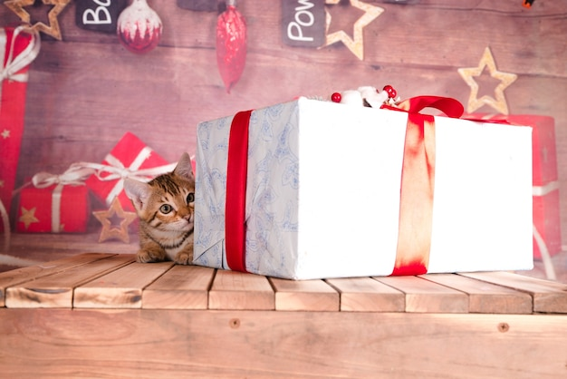 Closeup shot of a tabby kitten with christmas presents