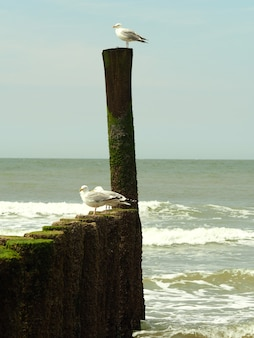 Closeup shot of three white seagulls standing on a wooden object