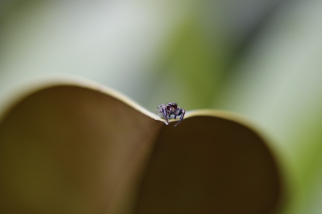 Closeup shot of a tiny spider on a leaf with a blurred background