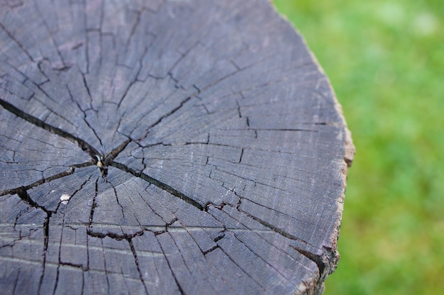Closeup shot of a tree stump