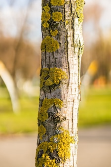 Closeup shot of a tree trunk with lichens and moss