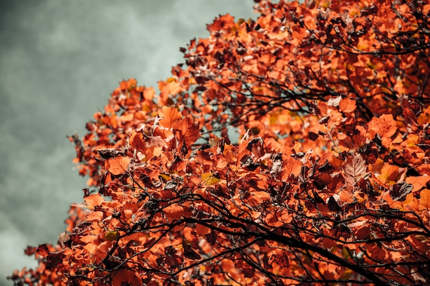 Closeup shot of a tree with orange leaves and a blurred cloudy sky in the background