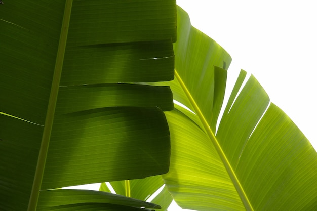 Closeup shot of tropical green plants with a white background