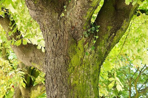 Colpo del primo piano del tronco di un albero nel parco