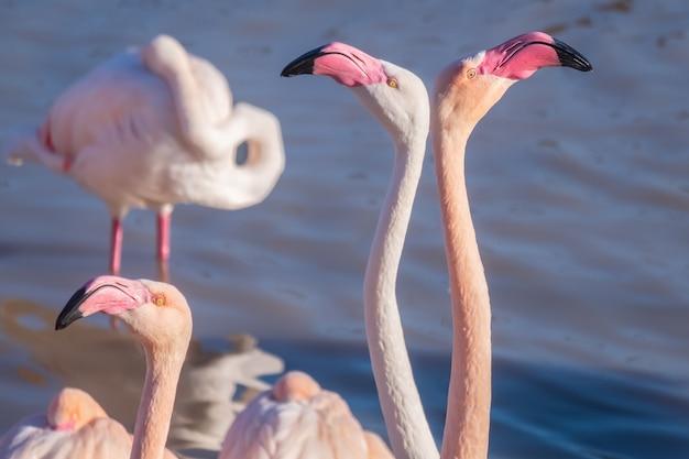 Closeup shot of two beautiful flamingos facing away from each other