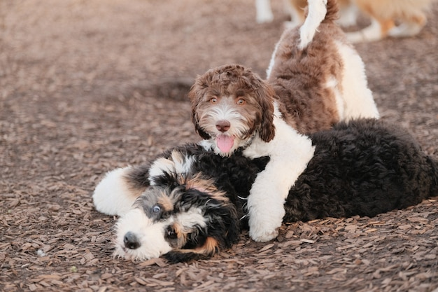 Closeup shot of two cute puppies playing at a park