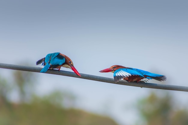 Closeup shot of two red-beaked birds sitting on a rope