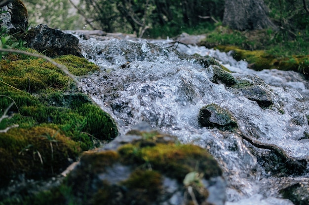 Closeup shot of the water flowing through the mossy ground