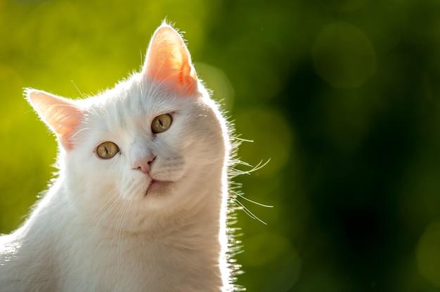 Closeup shot of a white cat