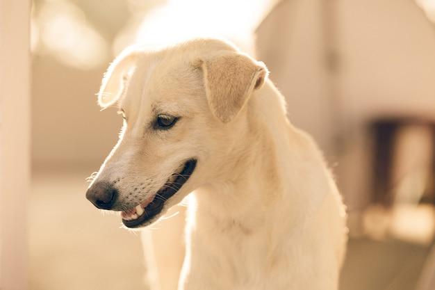 Primo piano di un cane bianco a casa