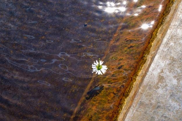 Colpo del primo piano di un fiore bianco che galleggia sull'acqua limpida