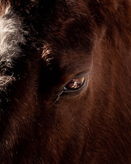 Closeup shot of a wild buffalo's eye