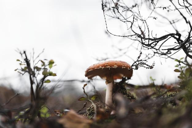 Colpo del primo piano di un fungo selvatico che cresce in un parco