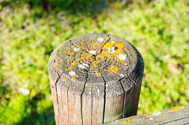 Colpo del primo piano di un palo di legno con fungo