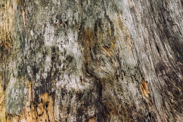 Closeup shot of wooden texture of a tree